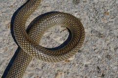 Lettre de serpent Photographie stock libre de droits