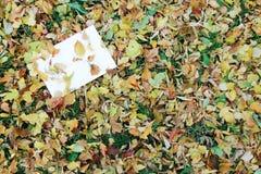 Lettre sur le fond d'automne Photos libres de droits