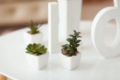 Lettres blanches sur le fond intérieur de volume Les Succulents dans des pots blancs se tiennent sur une table Photographie stock libre de droits