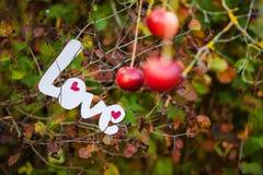 Lettres décoratives formant l'amour de mot Image libre de droits