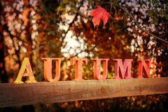 Lettres d'automne Photo stock
