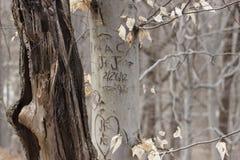 Lettres romantiques découpées dans l'écorce d'arbre Photos stock