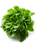 Lettuce. Lush fresh lettuce on white background royalty free stock photos