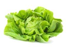 Free Lettuce Stock Photos - 10432493