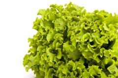 Lettuce. Fresh lettuce  isolated on white Stock Images
