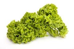 Lettuce. Fresh lettuce  isolated on white Royalty Free Stock Image
