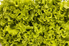 Lettuce. Fresh lettuce  isolated on white Royalty Free Stock Images