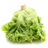 Lettuce. Fresh lettuce in white background Royalty Free Stock Photo