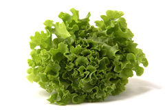 Lettuce. Chinese on white background Stock Image