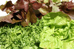 Lettuce. Royalty Free Stock Photos