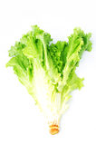 Lettuce Royalty Free Stock Images