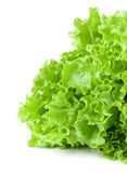 Lettuce. Fresh lettuce isolated on a white background Royalty Free Stock Images