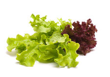 Lettuce. Royalty Free Stock Image