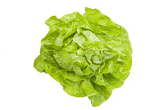 Lettuce. Fresh lettuce isolated on white Stock Photos