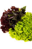 Lettuce. Isolated on white background Royalty Free Stock Images