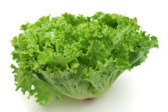 Lettuce. Fresh curly lettuce isolated on white background royalty free stock photography