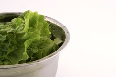 Lettuce Stock Photography