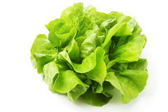 Free Lettuce Royalty Free Stock Photos - 19298768
