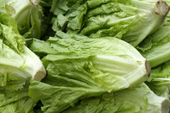 Lettuce. The close-up of green lettuce Stock Images