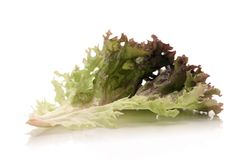 Lettuce. Fresh lettuce over white background Royalty Free Stock Images