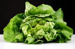 Lettuce. Green lettuce against black background stock photos