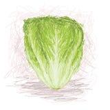Lettuce. Closeup illustration of a fresh lettuce vegetable Royalty Free Stock Photo