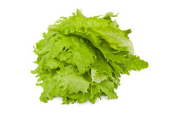 Lettuce. Fresh lettuce isolated on the white background Royalty Free Stock Images