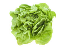 Lettuce. Salad in front of a white background stock image