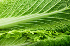 Lettuce. Close up of green lettuce Stock Photos