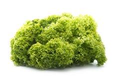 Lettuce. Fresh organic lettuce isolated on white background Stock Image