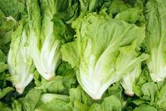 Lettuce. The close-up of fresh lettuce Stock Image
