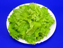 Lettuce 3 Royalty Free Stock Images
