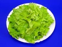 Lettuce 3. Leaves of lettuce on white plate against blue background royalty free stock images