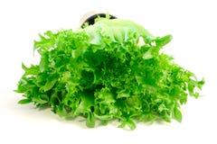 Lettuce. On white background Royalty Free Stock Photo