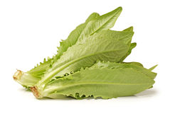 Free Lettuce Royalty Free Stock Photography - 33590907