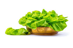 Lettuce. A beautiful lettuce salad on a white background stock image