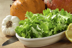 Lettuce. Salad in a tray with garlic Royalty Free Stock Photography