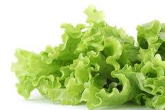 Free Lettuce Stock Image - 4311511