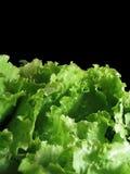 Lettuce. Close up of lettuce leaf against black stock photos