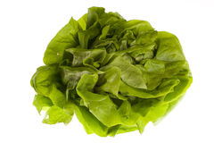 Lettuce. Fresh lettuce on white background Stock Photos