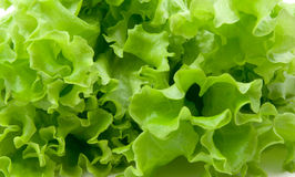 Lettuce. Green fresh lettuce as background royalty free stock photography