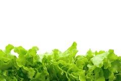 Lettuce. Isolated on white background stock photography