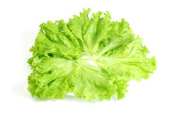Lettuce. Green leaves lettuce (Lactuca sativa) on a plate Stock Image