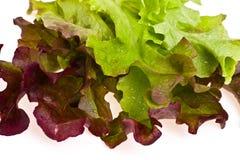 lettuce Στοκ Εικόνα