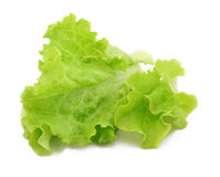 Lettuce. Leaves on a white background Stock Images