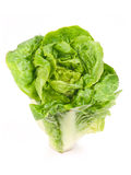 Lettuce. Roman isolated on white Stock Photography