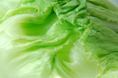 Lettuce. Closedup of lettuce Royalty Free Stock Photography