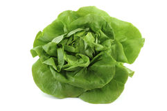 Free Lettuce Royalty Free Stock Photo - 8749625