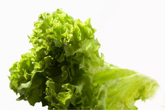 Lettuce. Salad sheet on a white background Isolated Royalty Free Stock Photos