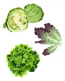 Lettuce. Clip-arts of various lettuce types vector illustration